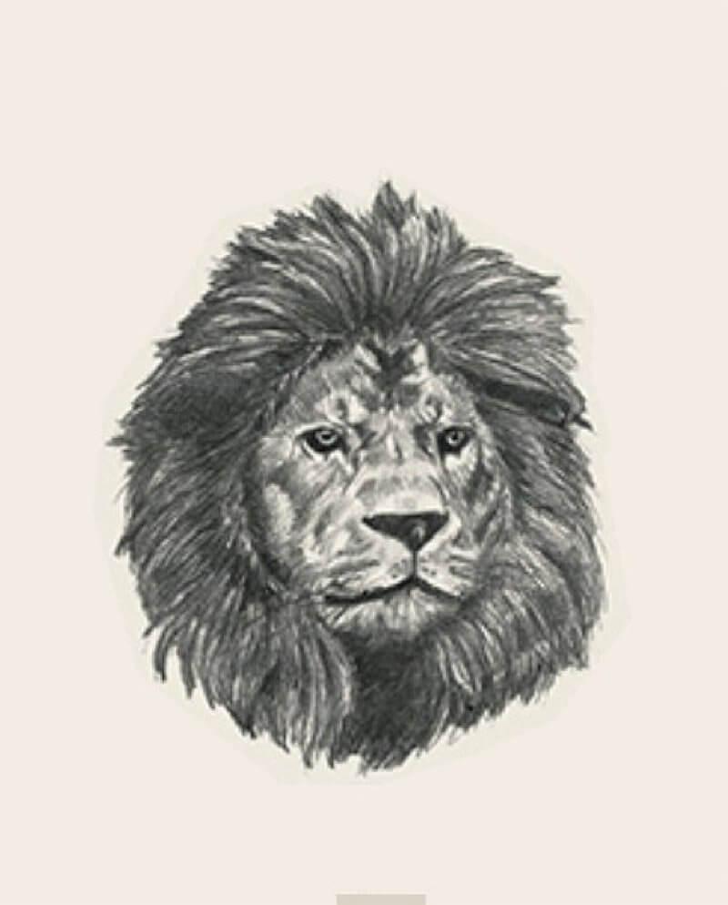 Ảnh con vật 15