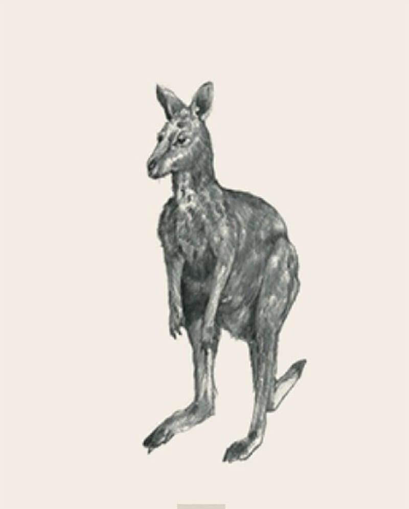 Ảnh con vật 16
