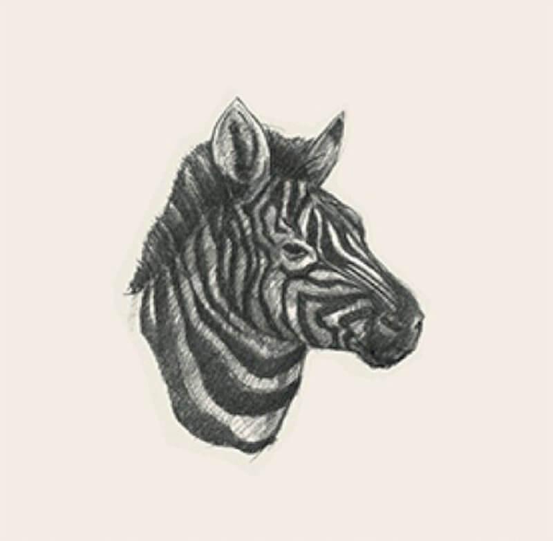 Ảnh con vật 2