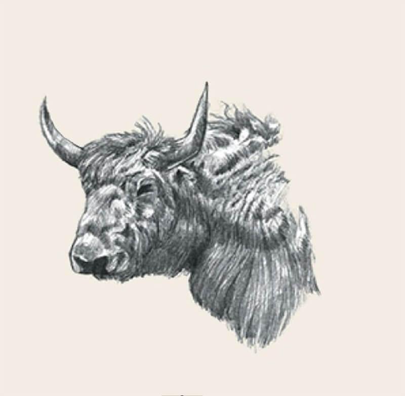 Ảnh con vật 3