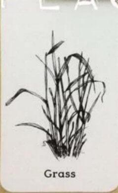 Ảnh thực vật