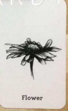 Ảnh thực vật 4D